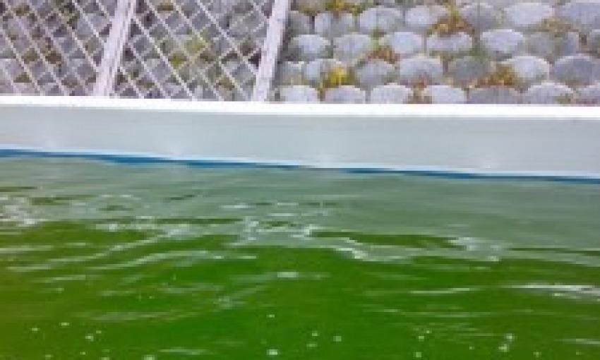 L'acqua della piscina è diventata verde, come faccio?